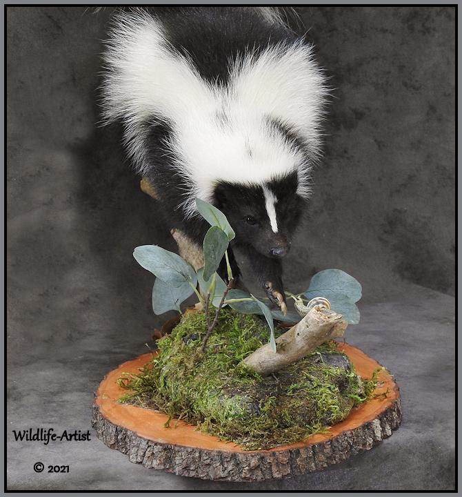 skunk84.jpg