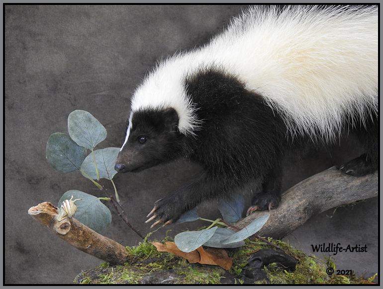 skunk81.jpg