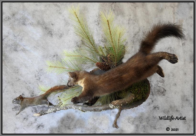 martensquirrel165.jpg