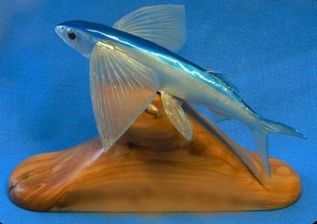 25620-Flying-Fish-2-WRW.jpg