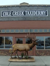 Cole Creek Taxidermy