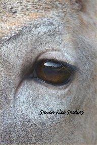 Steven Klee