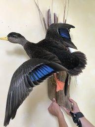 Birdman87