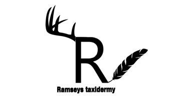Ramsey taxidermy