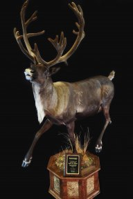 Rogers Taxidermy