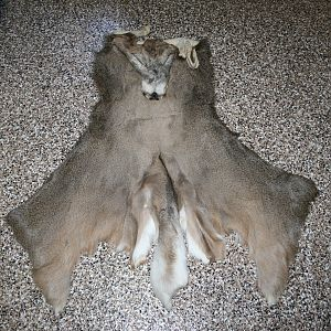 Whitetail Capes