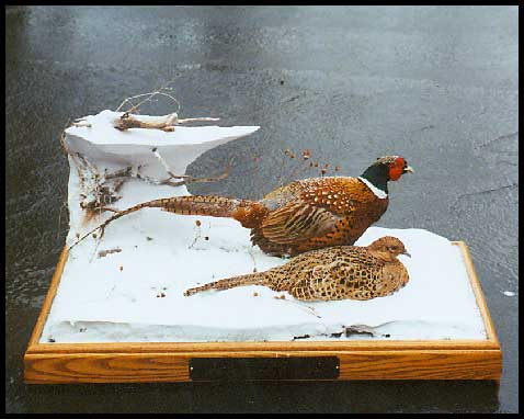 pheasants Coffee