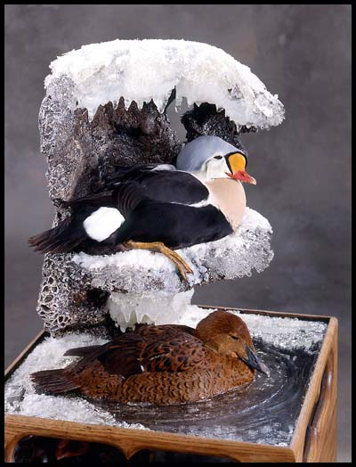 Gallery of Wildlife Ar...