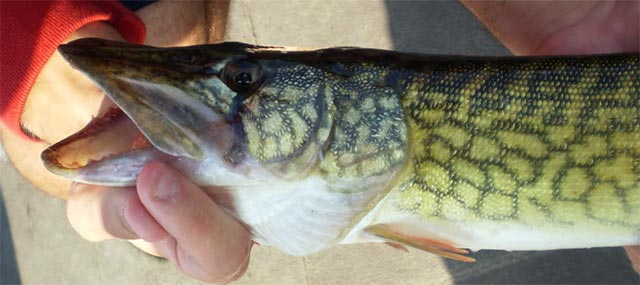 chain pickerel paint schedule  u00bb ken u0026 39 s corner
