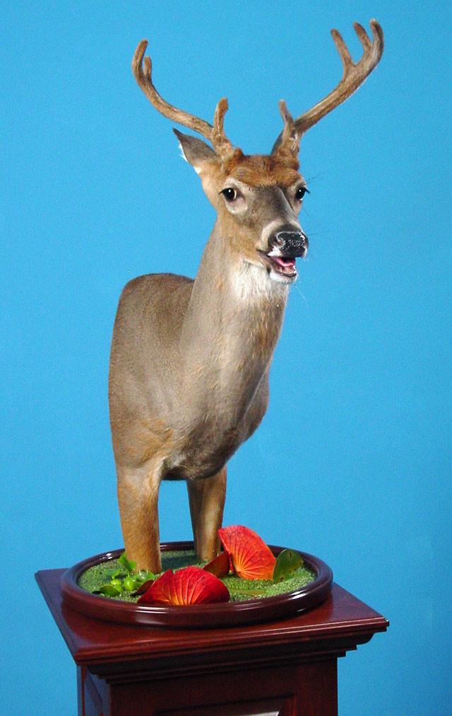 Rick Carter North American Champion Whitetail Deer Pedestal