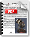 PDF Wild Turkey Taxidermy Displays