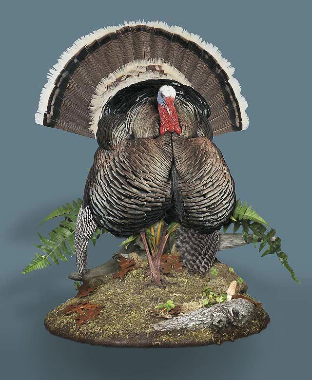 Wild Turkey Taxidermy Displays 187 Ken S Corner