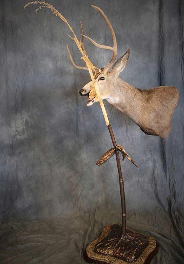 David Ferguson's Mule Deer