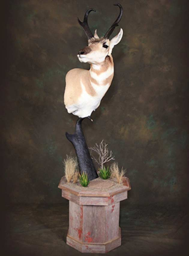 Keith Goodrow's Antelope