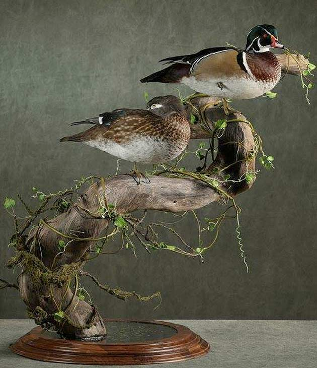 Justin Jones's Wood Ducks