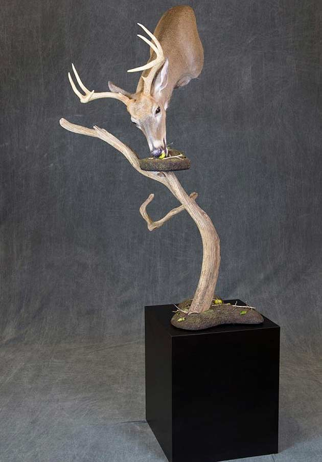 Vince Spellane's Whitetail Deer