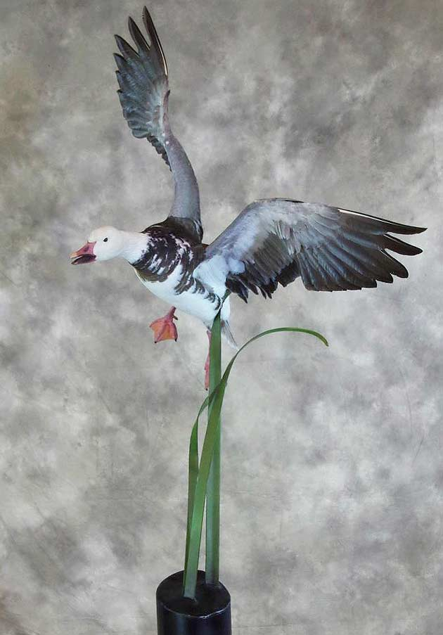 Carmen Helmer's Blue Goose