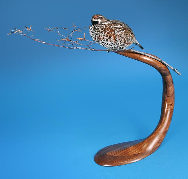 Mike Orthober's Hazel Grouse