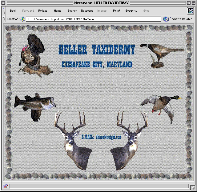 Taxidermy online the early years kens corner were simply an informational page set up similar to a business card these type of simple pages were offered as a service through local web providers colourmoves