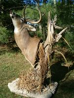 Whitetail Page